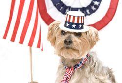 Political-dog